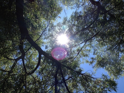 Straight-up view of the sun through some tree branches, taken using iPhone 4S
