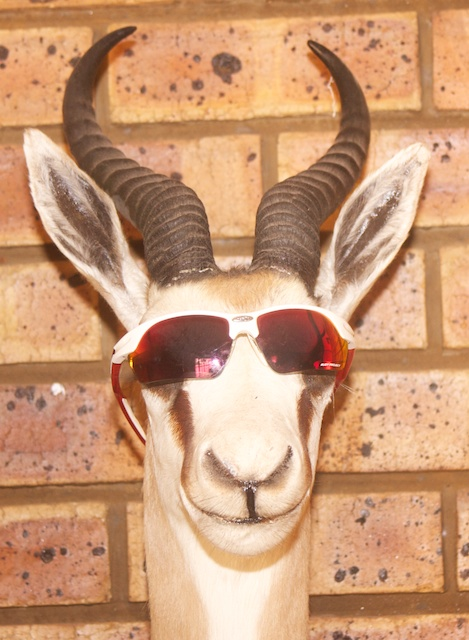 Added some sunglasses to a mounted head of a springbok in a hunter's house